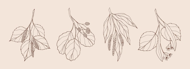 Zestaw ręcznie rysowanych gałęzi drzew