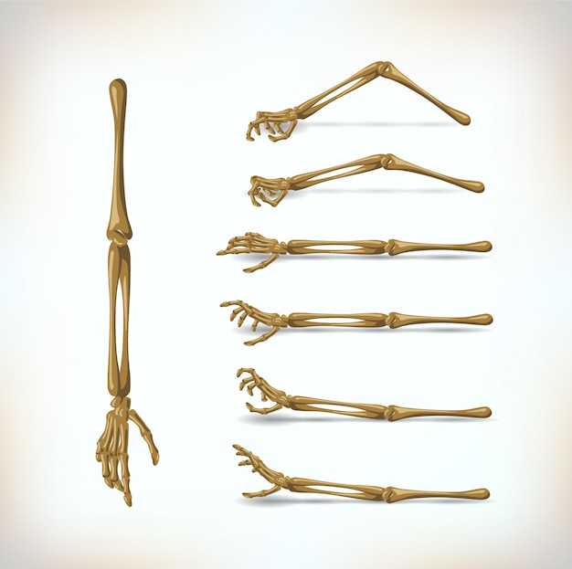 Zestaw ręczny z kości