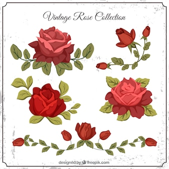 Zestaw rocznika róże z liśćmi