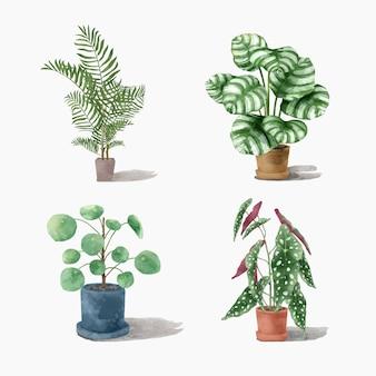 Zestaw roślin akwarelowych botanicznych