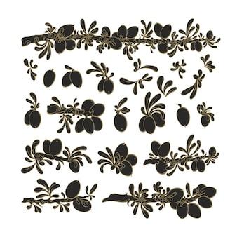 Zestaw roślin arganowych kolekcja botaniczna grafiki wektorowej liść tekstury fasoli oleistej