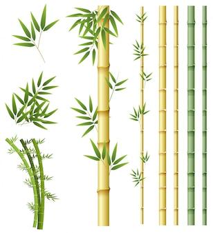 Zestaw roślin bambusa