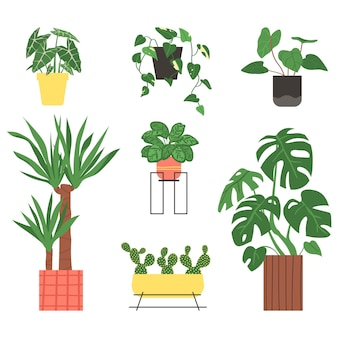 Zestaw roślin domowych na białym tle ilustracji wektorowych w płaskim stylu