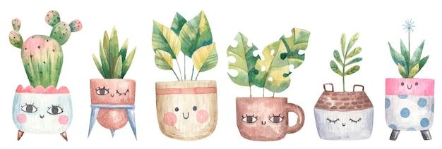 Zestaw roślin domowych, sukulentów, monstera, kaktusów w doniczkach z oczami