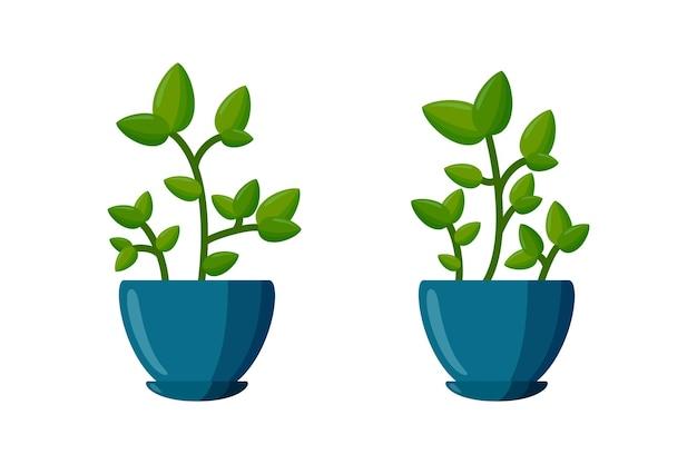 Zestaw roślin doniczkowych. zielona roślina w stylu cartoon. ilustracja wektorowa na białym tle