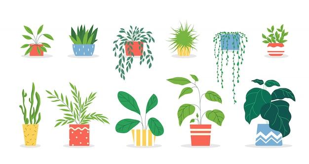 Zestaw roślin doniczkowych