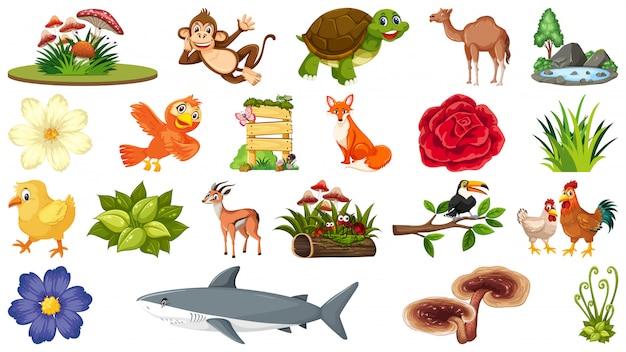 Zestaw roślin i zwierząt