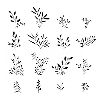 Zestaw roślin monochromatycznych