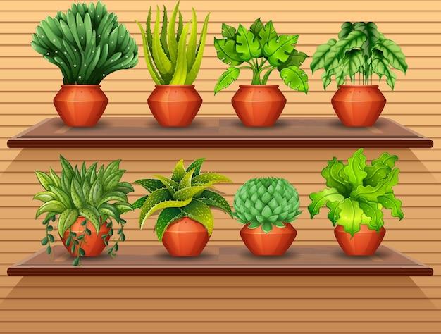 Zestaw roślin na półkach
