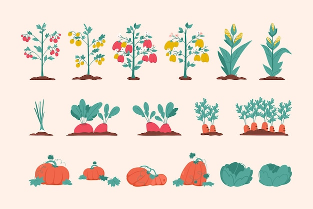 Zestaw roślin rolniczych warzyw na białym tle