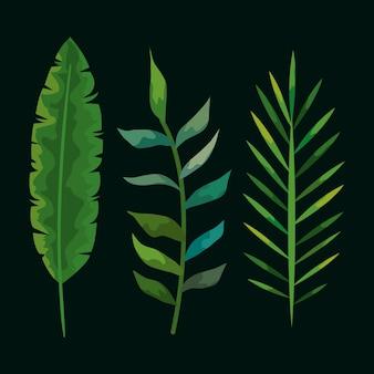 Zestaw roślin tropikalnych liści