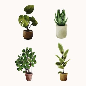 Zestaw roślin w doniczce akwarela wyciągnąć rękę