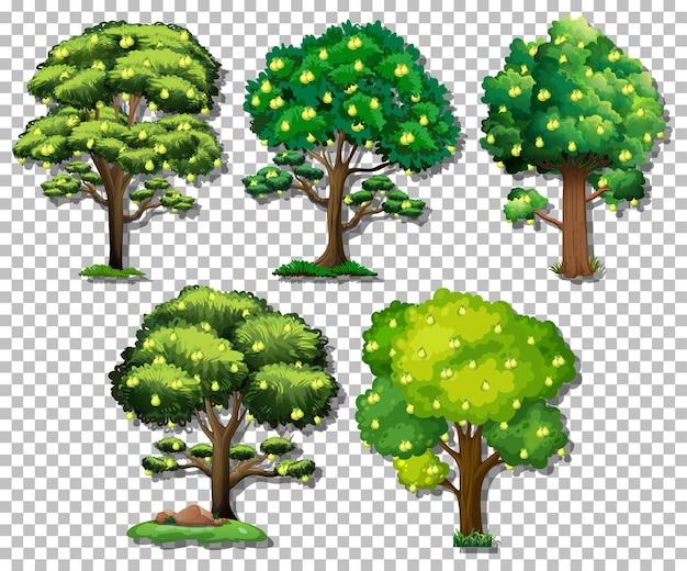 Zestaw różnych drzew na przezroczystym tle