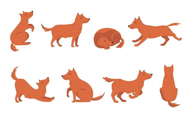 Zestaw różnych działań psa