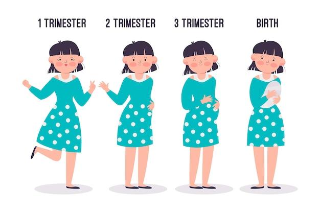 Zestaw różnych etapów ciąży