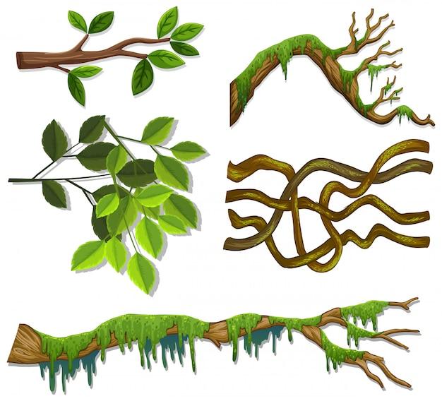 Zestaw różnych gałęzi i liści na białym tle