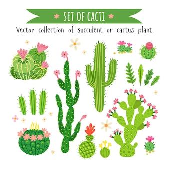 Zestaw różnych kaktusów i sukulentów