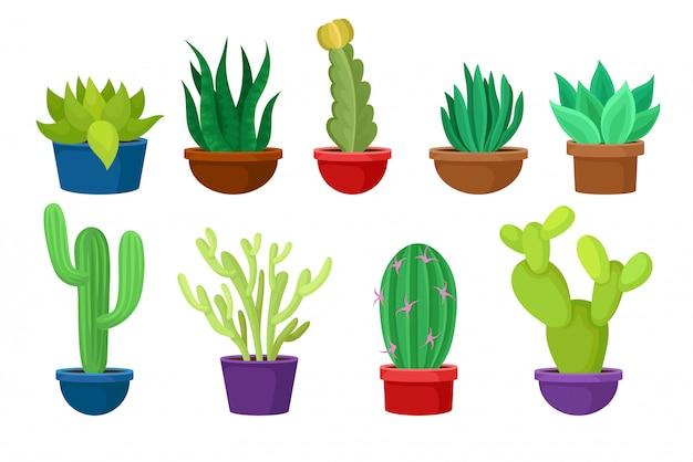 Zestaw różnych kaktusów w kolorowych doniczkach ceramicznych.