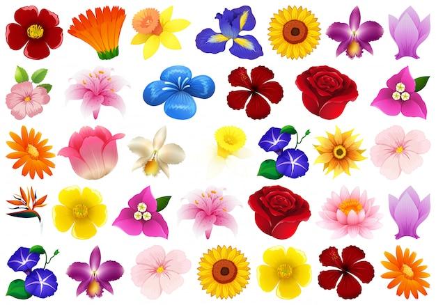 Zestaw różnych kwiatów