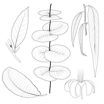 Zestaw różnych liści jesienią na białym tle