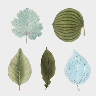 Zestaw różnych niebieskich i zielonych liści