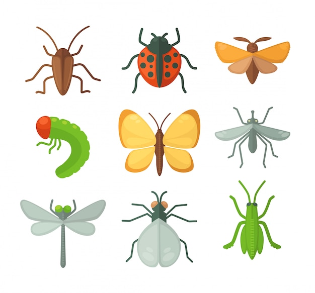 Zestaw różnych owadów. ilustracji wektorowych