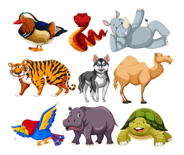 Zestaw różnych postaci zwierząt