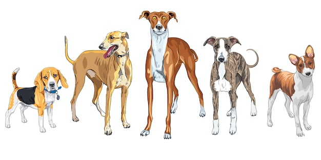 Zestaw różnych ras psów