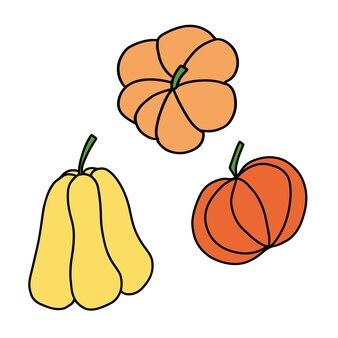 Zestaw różnych rodzajów dyni jesienne zbiory warzyw