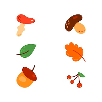 Zestaw różnych rodzajów grzybów i liści.