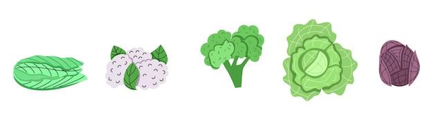 Zestaw różnych rodzajów kapusty. kapusta biała, kapusta czerwona, kapusta pekińska do menu, projekt przepisu na sałatkę wegetariańską. ilustracja wektorowa w stylu kreskówki