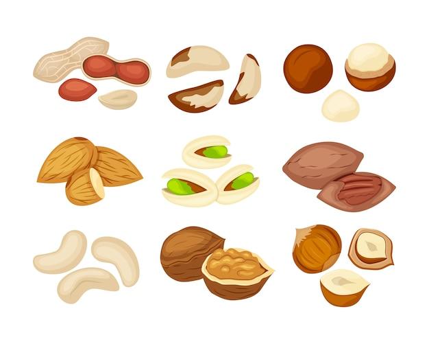 Zestaw różnych rodzajów orzechów: migdał, orzech, kashew, pekan, orzeszki ziemne, pistacje, makadamia, orzech brazylijski, orzech laskowy. ilustracja na białym tle