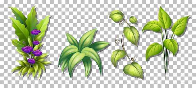 Zestaw różnych roślin na przezroczystym tle