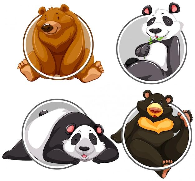 Zestaw różnych transparent niedźwiedzia