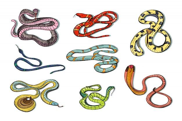 Zestaw różnych żmija węża, kobry i innych. kolorowe ręcznie rysowane kolekcja węża. ilustracja.