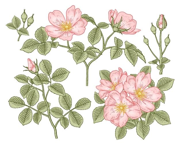 Zestaw różowe kwiaty na białym tle