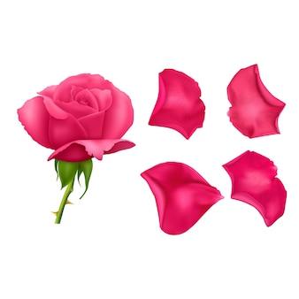 Zestaw różowych płatków róż