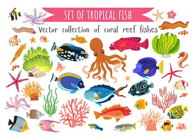Zestaw ryb koralowych i wodorostów w płaski na białym tle.