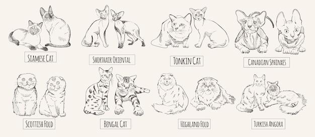 Zestaw rysowanych ras kotów