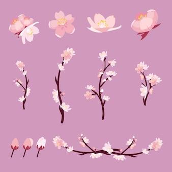 Zestaw sakura lub kwiat wiśni