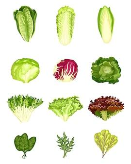 Zestaw sałaty na białym tle. różnego rodzaju sałatki radicchio, sałata, rzymska, jarmuż, kapusta, szczaw, szpinak, mizuna, zdrowe organiczne wegetariańskie jedzenie. projekt ilustracji wektorowych.