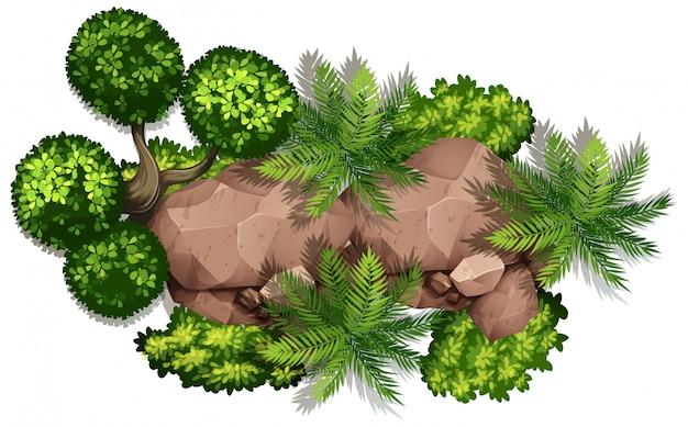 Zestaw skał natury i roślin