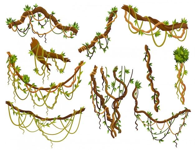 Zestaw skręconych gałęzi dzikich liany. rośliny winorośli w dżungli. roślinność lasów deszczowych i egzotyczna botanika