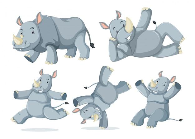 Zestaw ślicznych nosorożców