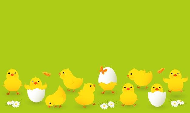 Zestaw ślicznych żółtych kurczaków.