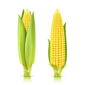 Zestaw słodkiej kukurydzy
