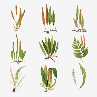 Zestaw starych liści paproci