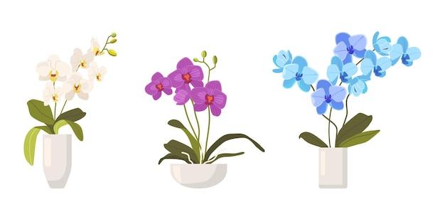 Zestaw storczyków w doniczkach na białym tle. różne rodzaje tropikalnych lub krajowych kwiatów kolorowych, piękna flora, kwitnące storczyki elementy projektu. ilustracja kreskówka wektor