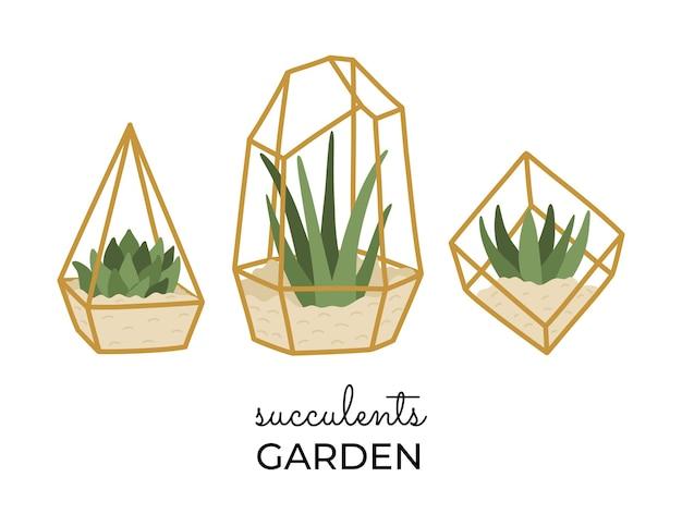 Zestaw sukulentów w złotych terrariach, różne modne ręcznie rysowane rośliny domowe w stylu płaski