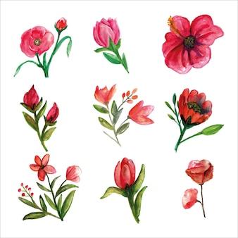 Zestaw świeżego dzikiego kwiatu różowawej akwareli